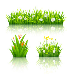 beautiful flowers with green leaves collections vector image