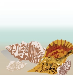 sea shell hand drawn vector image