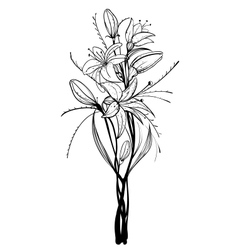 Lily flowers outline vector
