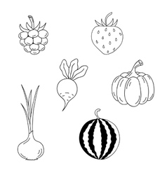 Set of berries and vegetables vector