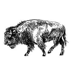 Hand sketch bison vector
