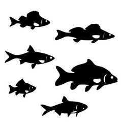 river fish vector image vector image