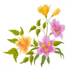 Flower alstroemeria vector
