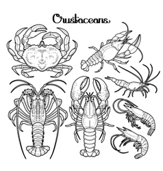 Graphic crustaceans collection vector