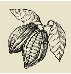Black cacao beans vector