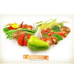 Harvest juicy and ripe vegetables isolated on vector image