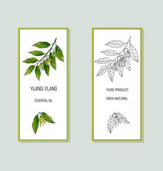 Ylang-ylang essential oil label vector