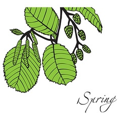 Spring tree branch with buds vector