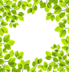Leaves isolated vector image vector image