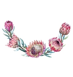 Watercolor tropical protea wreath vector