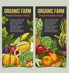Banner or flyer with vegetables and fruits vector