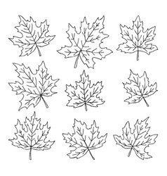 Beautiful set of doodle maple leaves isolated vector
