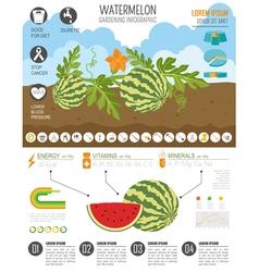 Gardening work farming infographicwatermelon vector