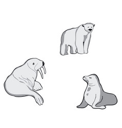 Northern animals walrus white bear and seal vector
