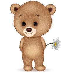 Cute little bear isolated on white background vector image