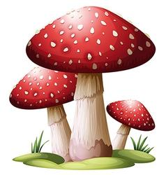 Red mushroom vector