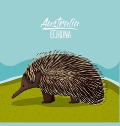 Australia echidna poster in outdoor scene on vector