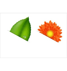 Flower and leaf vector