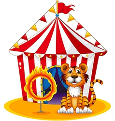 A circus tent at the back of the tiger and the vector image vector image