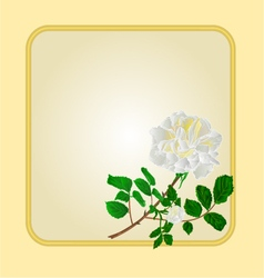 Golden frame with white rose greeting card vector