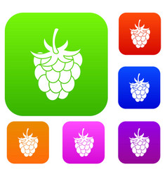 raspberry or blackberry set color collection vector image vector image