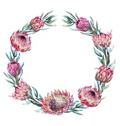 Watercolor tropical protea wreath vector