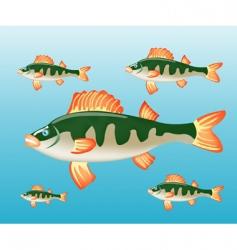 fish perch in water vector image vector image
