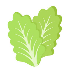 lettuce flat icon vegetable and salad leaf vector image vector image