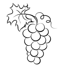 Monochrome of grapes logo vector