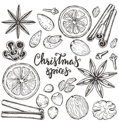 Collection of christmas spices and citrus vector