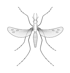Nature mosquitoes stilt disease transmitter vector