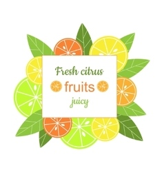 square frame with citrus vector image vector image