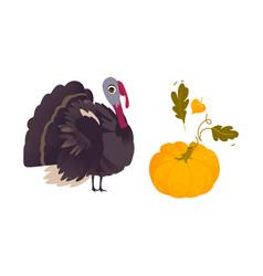 Farm hen turkey and ripe orange pumpkin vector