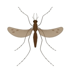 Nature mosquitoes stilt disease transmitter vector