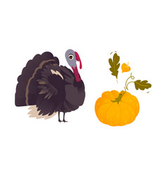 Farm hen turkey and ripe orange pumpkin vector