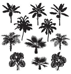 tropical plants silhouette set vector image vector image