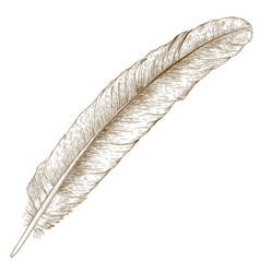 Engraving of feather vector