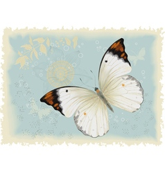 Butterfly on a blue background vector image vector image