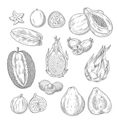 sketch icons set of exotic tropical fruits vector image vector image