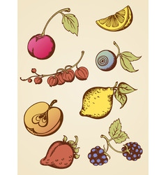 vintage fruits vector image