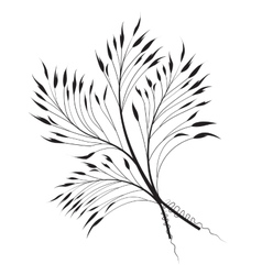 Decorative grass vector