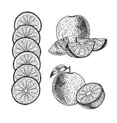 hand drawn set of orange sketch vector image vector image