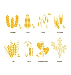 Cereal grains icons rice wheat corn vector