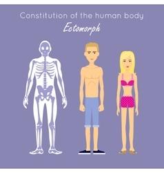 Constitution of Human Body Ectomorph Ectomorphic vector image
