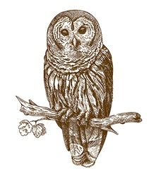 Engraving owl vector