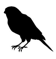 black silhouette of canary vector image vector image
