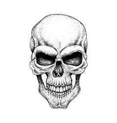 Graphic skull Dotwork vector image