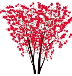 Card with autumn maple tree Red maple trees in vector image