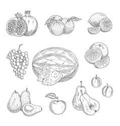 sketch icons of exotic and garden fruits vector image
