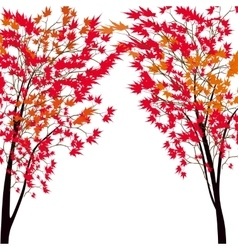 Card with autumn maple tree Red maples Japanese vector image